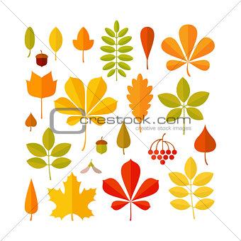 Autumn leaf set isolated on white background.