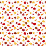 Seamless Pattern From Natural Maple Leaves. Vector Illustration.