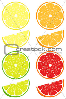 Citrus slices vector set