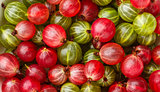 Fresh red and green gooseberries. Top view