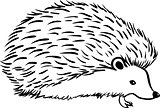 Hedgehog stylization icon logo. Line sketch