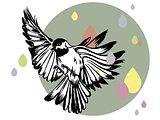 flying bird and colorfull rain