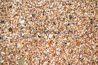 Crushed cockleshells on the beach close-up background