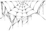 Black spiderweb on white background