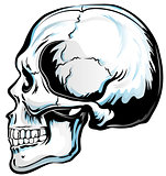 Anatomic Skull Vector Art. Detailed hand-drawn illustration of s