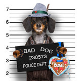 bavarian beer dog  mugshot