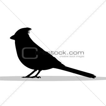 Cardinal bird black silhouette animal