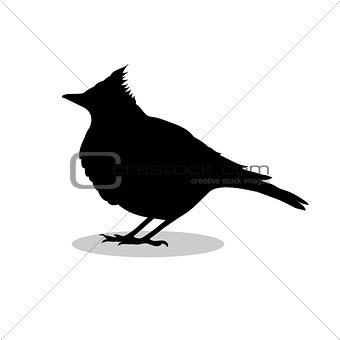 Skylark lark bird black silhouette animal