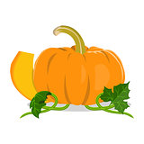 Isolated pumpkin on white background.