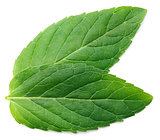Fresh raw mint leaf on white