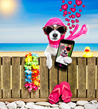 dog  on  beach on summer vacation holidays