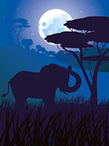 African Night with Elephant