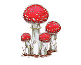 Family of fly agaric mushrooms isolated on white background. Vector Illustration