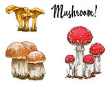 Mushrooms orange cap boletus, fly agaric and chanterelles isolated on white background. Vector Illustration