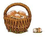 Wicker basket full of orange cap boletus isolated on white background. Vector Illustration