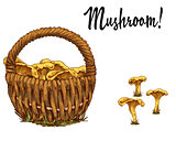Wicker basket full of chanterelles and mushroom separately isolated on white background. Vector Illustration