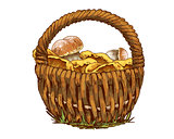 Wicker basket full of mushrooms orange cap boletus and chanterelles isolated on white background. Vector Illustration