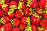 Background of ripe organic farm strawberries