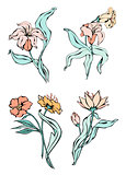 Lily flowers. Vector black contour with fill isolated on white background