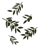 Vector olive branches