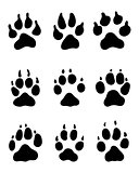 print of paw of dogs