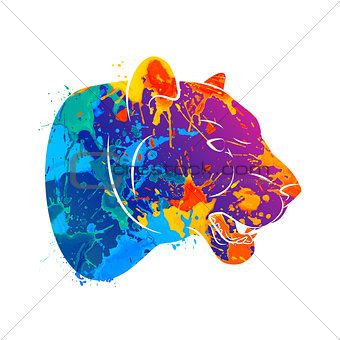 Abstract predatory cat Leopard