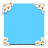 Vector Blue Wooden Board with Camomiles