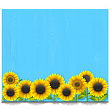 Vector Blue Wooden Board with Sunflowers