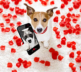 happy valentines dog selfie