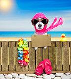 dog  on  beach on summer vacation holidays