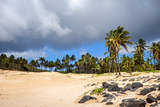 Palm trees on Anakena beach, easter island