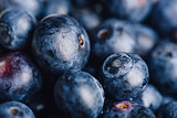 Blueberry Macro Background