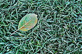 Fallen leaf on the grass
