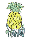 Hawaii. Typography banner. Pineapple sketch illustration. Aloha poster. Vector lettering.
