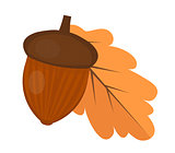 Oak acorn is flat or cartoon style. Isolated on white background. Vector illustration.