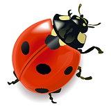 Vector Red Ladybug