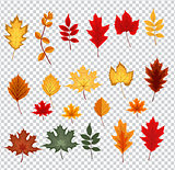 Abstract Vector Illustration with Falling Autumn Leaves on Trans