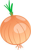 Vector drawing of onion