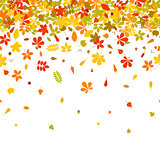 Seamless border Autumn falling leaf on white background.