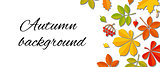 Autumn falling leaf background.