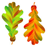 Two autumn oak leaves isolated on white background. Vector Illustration