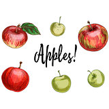 Illustration with different apples, red and green isolated on white background. Vector Illustration