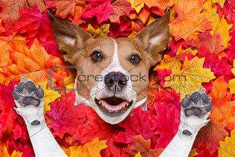 autmn fall leaves surprised dog