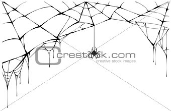 Black spider and torn web. Scary spiderweb of halloween symbol
