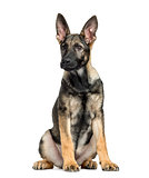 German Shepherd sitting, 4 months old, isolated on white