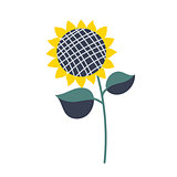 Sunflower isolated vector illustration cartoon style.