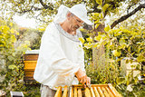 Beekeeper checking his bees