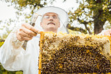 Beekeeper holding honeycomb with bees in his hands