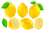 Lemons collection isolated on white background