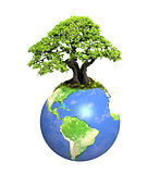 Eco concept. Tree on Earth